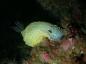 Diving Trip Marina Del Este